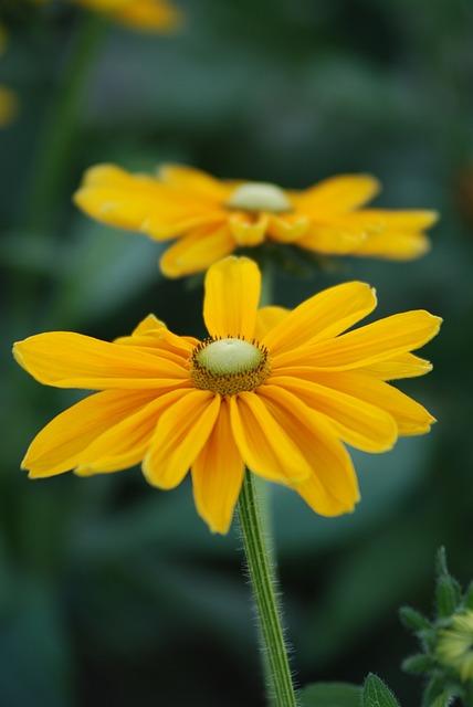 Nature, Flower, Flora, Summer, Garden, Yellow, Park