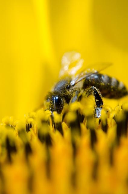 Bee, Working Bee, Nature, Sunflower, Yellow, Pollen