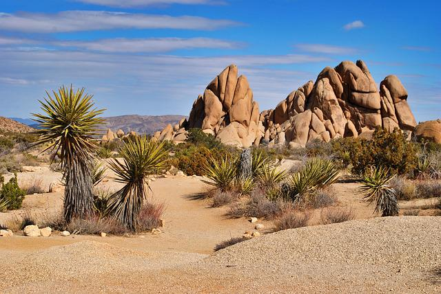 Desert, Sand, Dry, Travel, Nature, Joshua Tree, Yucca