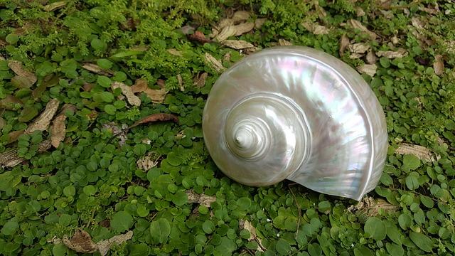Pearl Fire, Oud Shells, Nautilus Sea, Nautilus Green