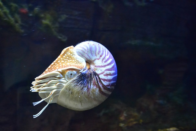 Nautilus, Aquarium, Fish, Aquarium Fish, Scuba Diving