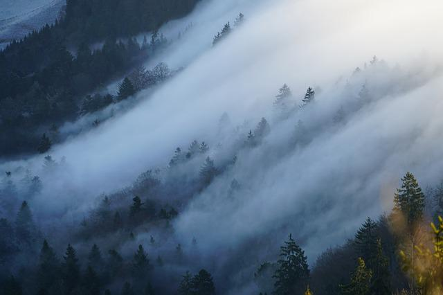 Fog, Nebellandschaft, Wave Of Fog, Forest, Trees