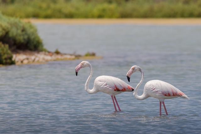 Flaming, Flamingos, Birds, Pink, Animals, Neck, Exotic
