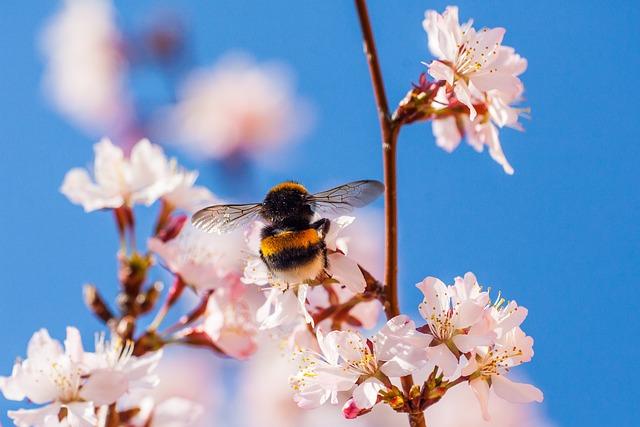Hummel, Flowers, Garden, Spring, Nectar, Pollination
