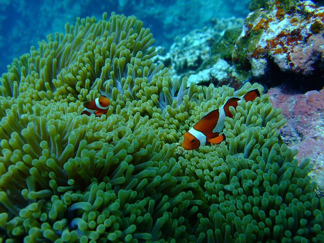 Sea, Fish, Diving, Nemo