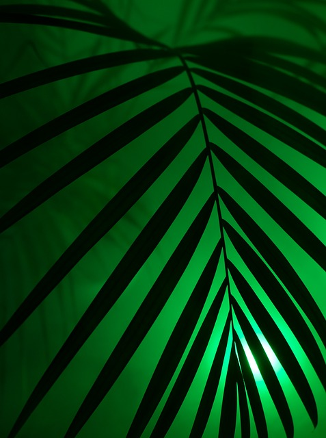 Palm, Neon Light, Neon, Party, Art, Artificial, Leaf