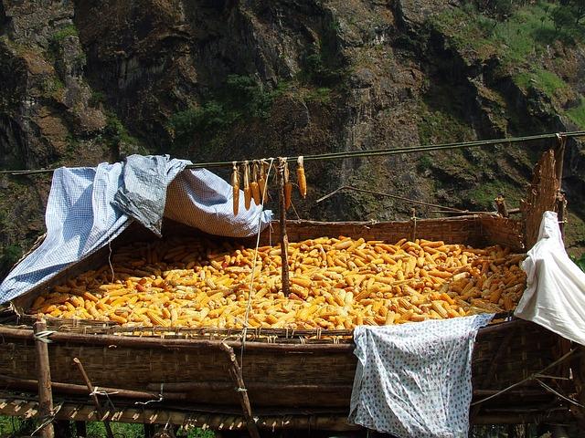 Corn, Drying, Nepal, Annapurna