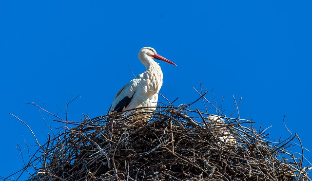 Stork, Nest, Storchennest, Bird, Rattle Stork