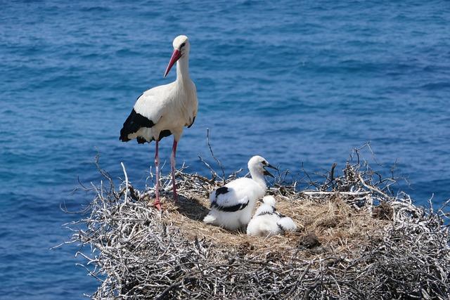 Stork, Portugal, Nest, Rock, Algarve