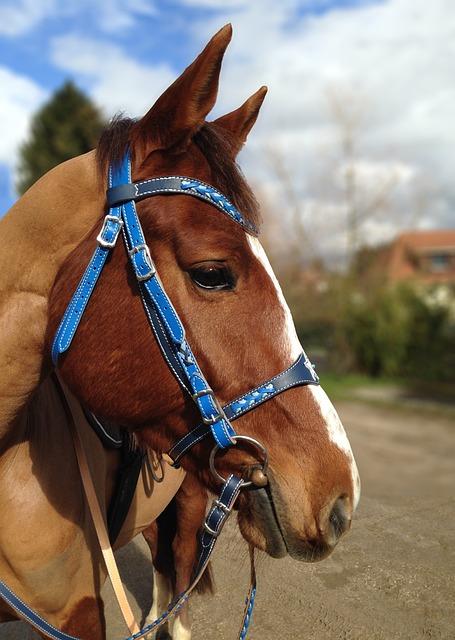 Horse, Portrait, Profile, Net Blue, Shaved, Equine
