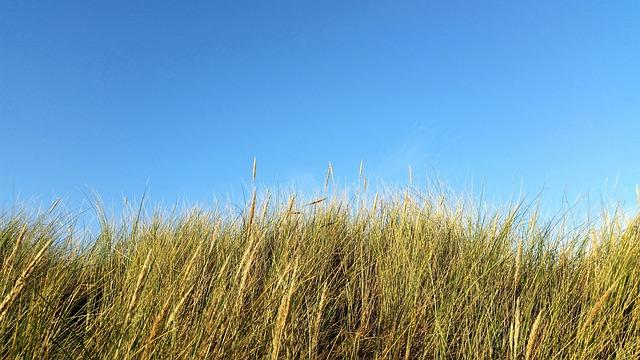 Dunes, Grass, Dune Grass, Netherlands, Coast, Reed