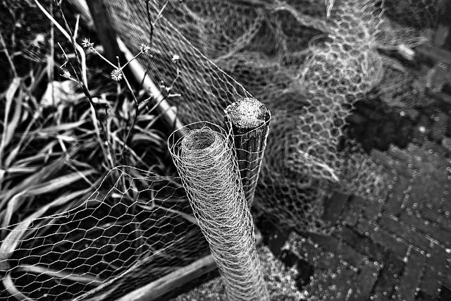 Chicken Wire, Netting, Wire Netting, Mesh, Wire Mesh