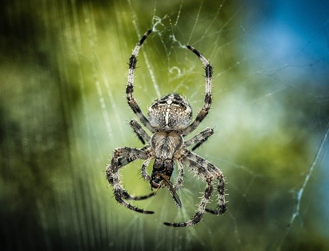 Spider, Cross, Insect, Network, Close, Nature, Animal