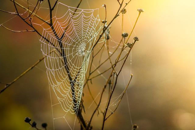 Cobweb, Dew, Nature, Moist, Autumn, Network, Morgentau