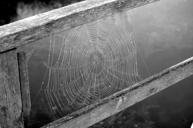 Cobweb, Network, Black And White, Nature