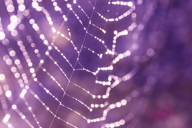 Cobweb, Network, Spin Threads, Nature, Spider, Dewdrop