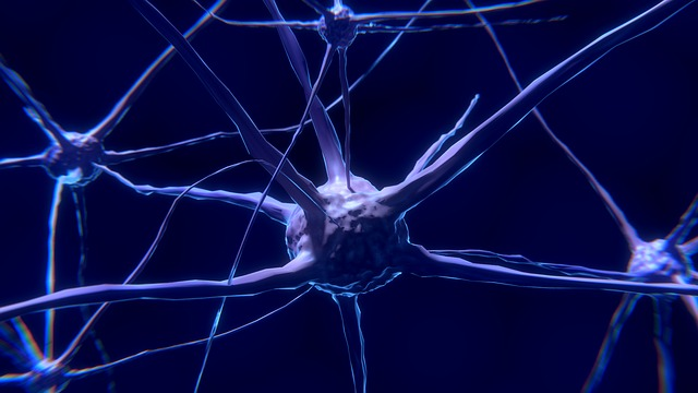 Nerve Cell, Neuron, Brain, Neurons, Nervous System