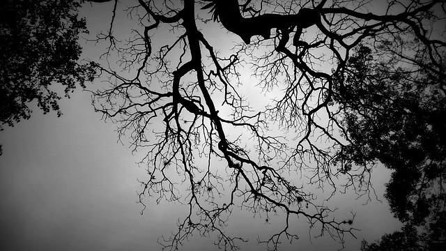 Shadow Tree, Black And White Tree, Neurons, Design
