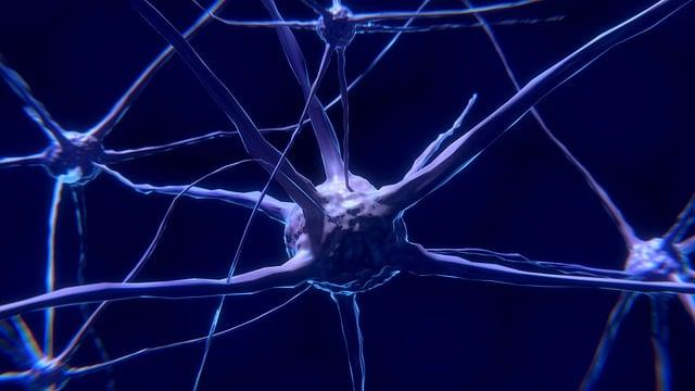 Nerve Cells, Neurons, Nervous System, Brain