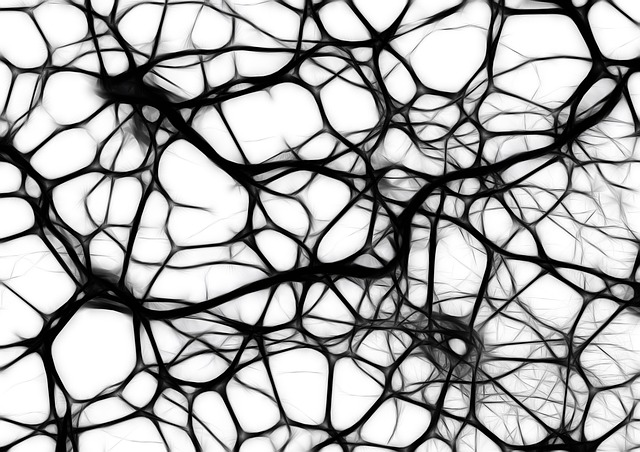 Neurons, Brain Cells, Brain Structure, Brain, Network