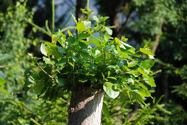 Tree Stump, New Drives, Leaves, Boy Shoots, Sprout