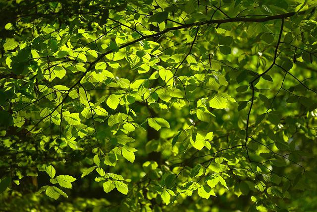 Leaves, Foliage, Tree, Spring Leaves, New Leaves, Green