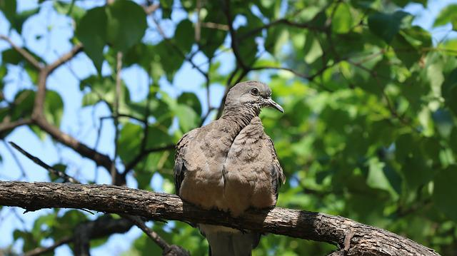 Nature, Wood, Outdoors, New, Park, Pigeon