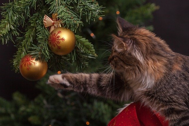 New Year's Eve, Cat, Christmas Decorations