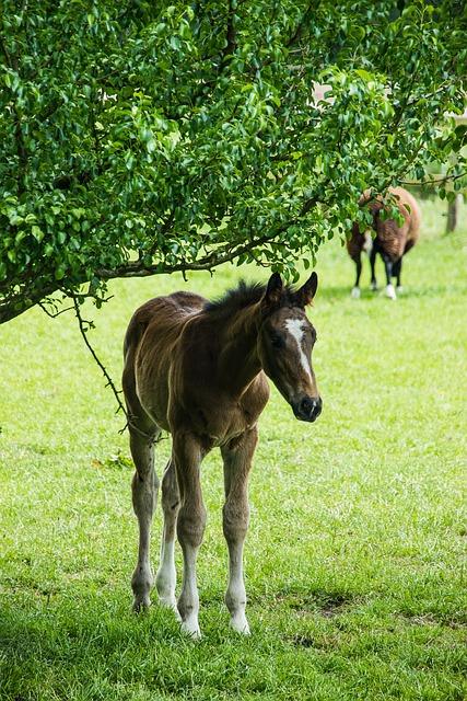 Foal, Meadow, Horses, Newborn