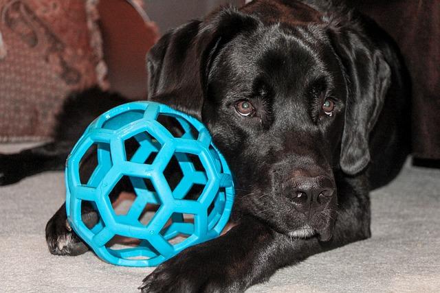 Dog, Toy, Saint Bernard, Newfoundland, Hound, Ball, Pet