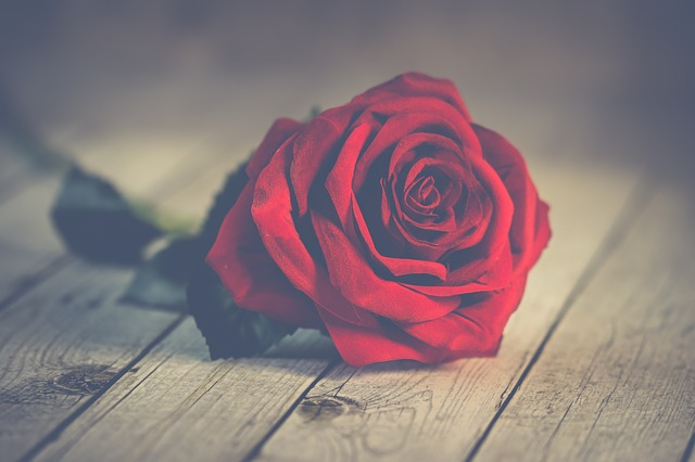 Nature, Roses, Romantic, Nice, Love, Desktop Background