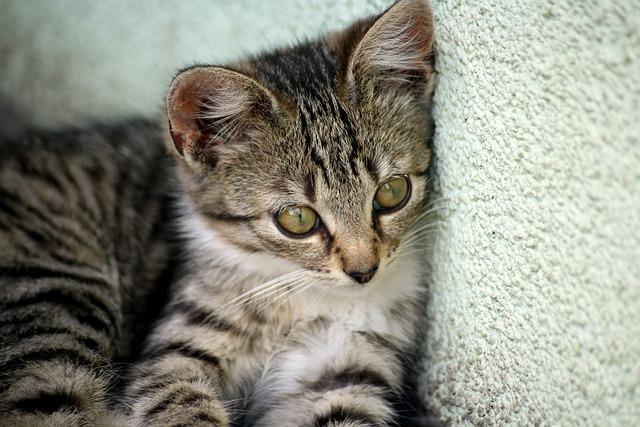 Kitten, Cat, Young, Nice, Animals, Cats, Nature