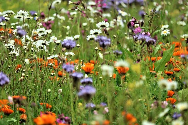 Kempen, Niederrhein, Home, Biodiversity, Wild Flowers