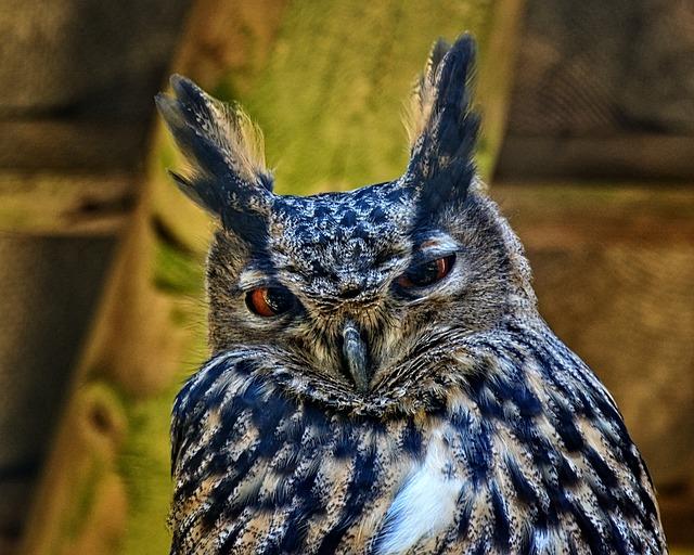 Eagle Owl, Bubo Bubo, Bird, Owl, Night Active