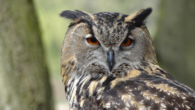 Owl, Eagle Owl, Forest, Night, Bird, Forests, Feather