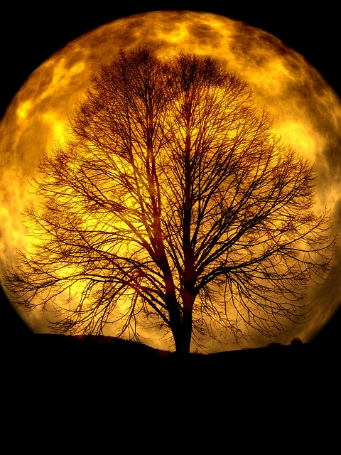 Moon, Tree, Kahl, Silhouette, Background, Night