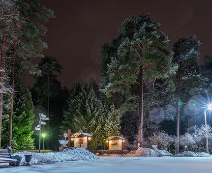 Trees, Winter, Snow, Night, Lights