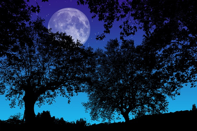 The Night, Full Moon, Trees, Silhouette, Night, Watch