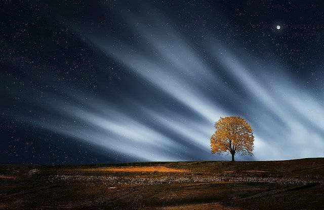 Tree, Natur, Nightsky, Meadow, Landscape, Outdoors