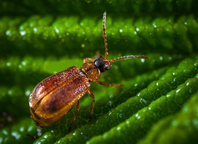 No One, Nature, Bespozvonochnoe, Outdoors, Insect