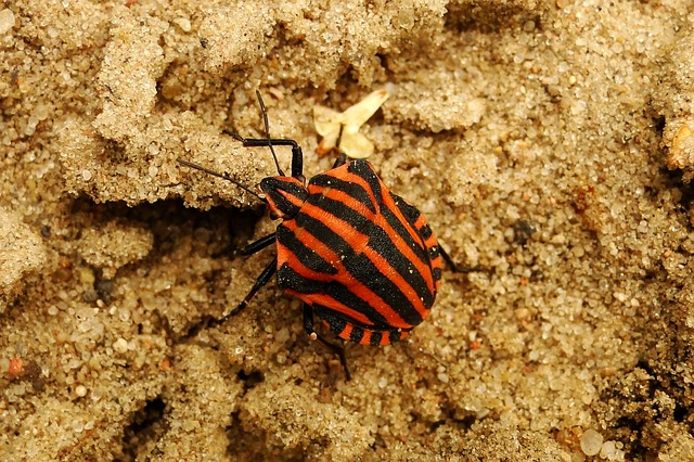 Invertebrates, Nature, A Little, No One, Animals