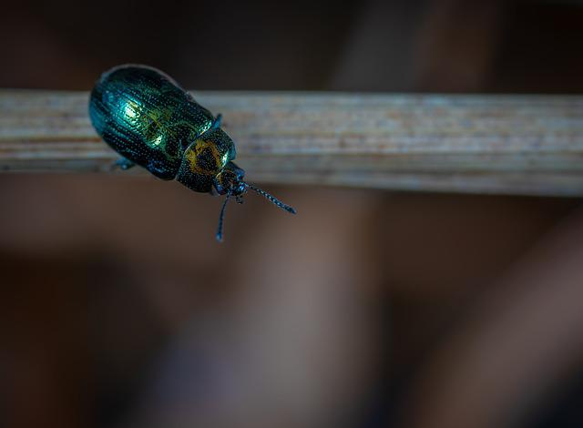 Nature, Insect, Outdoors, No One, Beetle, Beetle-steed