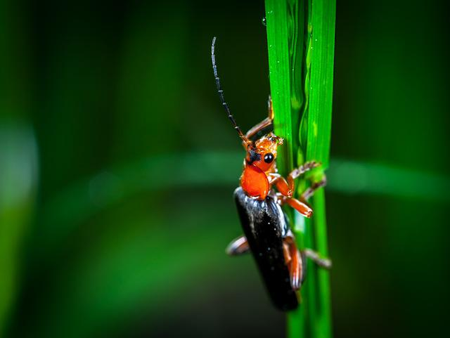 Insect, No One, Nature, Living Nature, Outdoors, Beetle