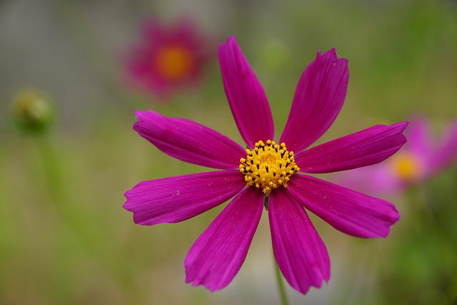 Nature, Flower, Plant, Summer, No One, Closeup