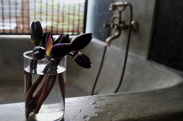Faucet, Water, Cup, Flowers, No One, Under The Roof
