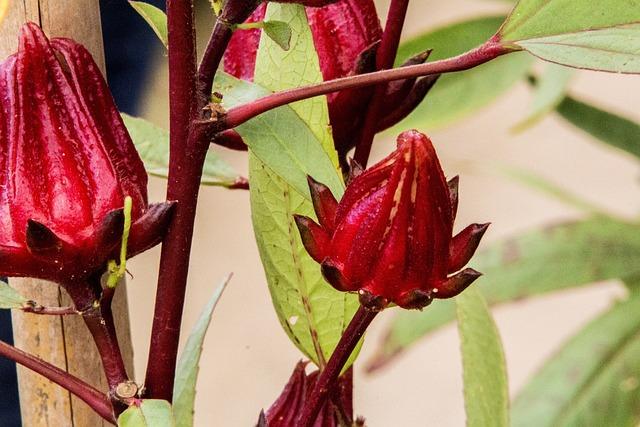 Exotic Flower, Fruit, Flower, No Person, Plant, Nature