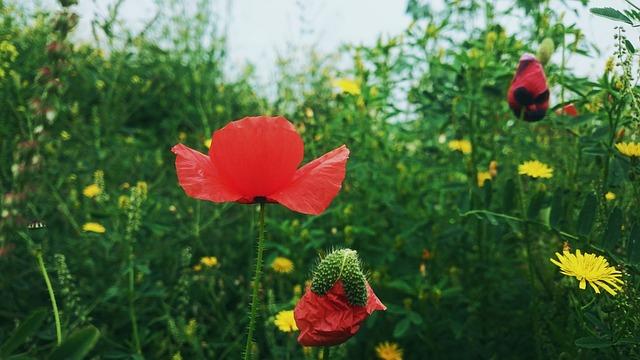 Nature, No Person, Flower, Plant, Summer, Garden