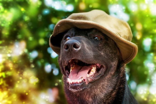 Portrait, Nature, Cute, Animal Kingdom, Dog, No Person