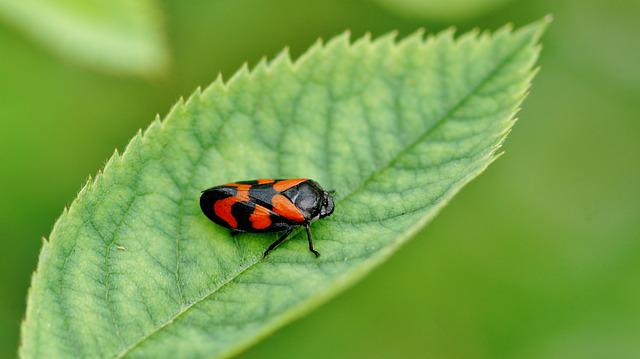 Insect, Nature, Leaf, No Person