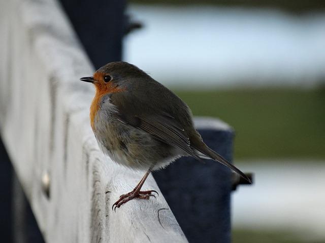 Birds, Wildlife, Nature, No Person